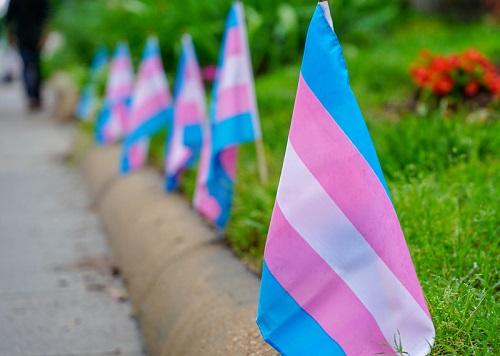 Várias bandeiras trans alinhadas ao redor de um jardim junto à passagem de pessoas