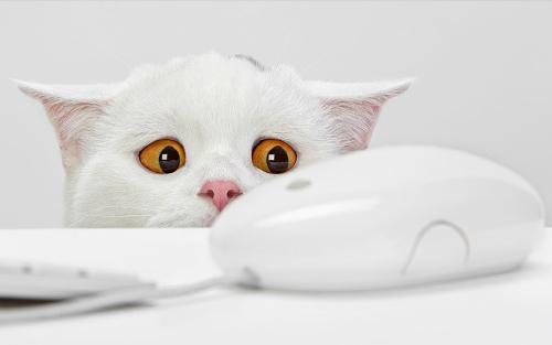 O Medo do Gato